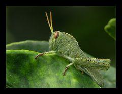 Symphonie in grün