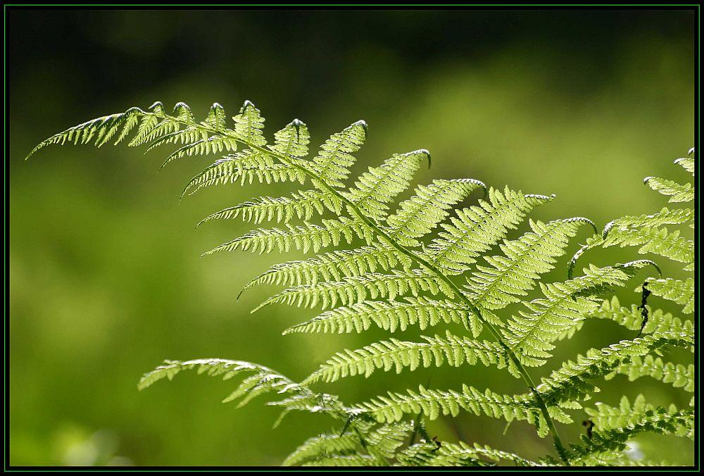 Synphonie in grün