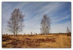 Syrauer Heide - 12.03.2011