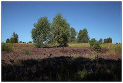 Syrauer Heide - 4