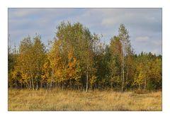 Syrauer Heide im Herbst - 4