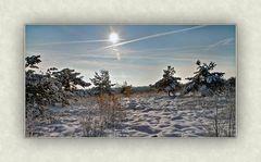 Syrauer Heide - Winterimpression 2