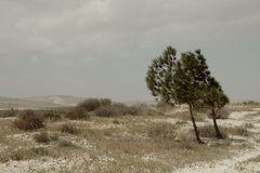 Syrische Landschaften 6