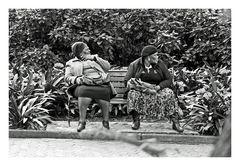 Szene im Botanischen Garten Kapstadt