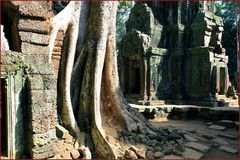 Ta Prohm Kloster Cambodia