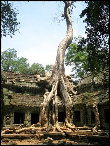 ta prohm temple II
