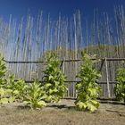 Tabak in Huronia