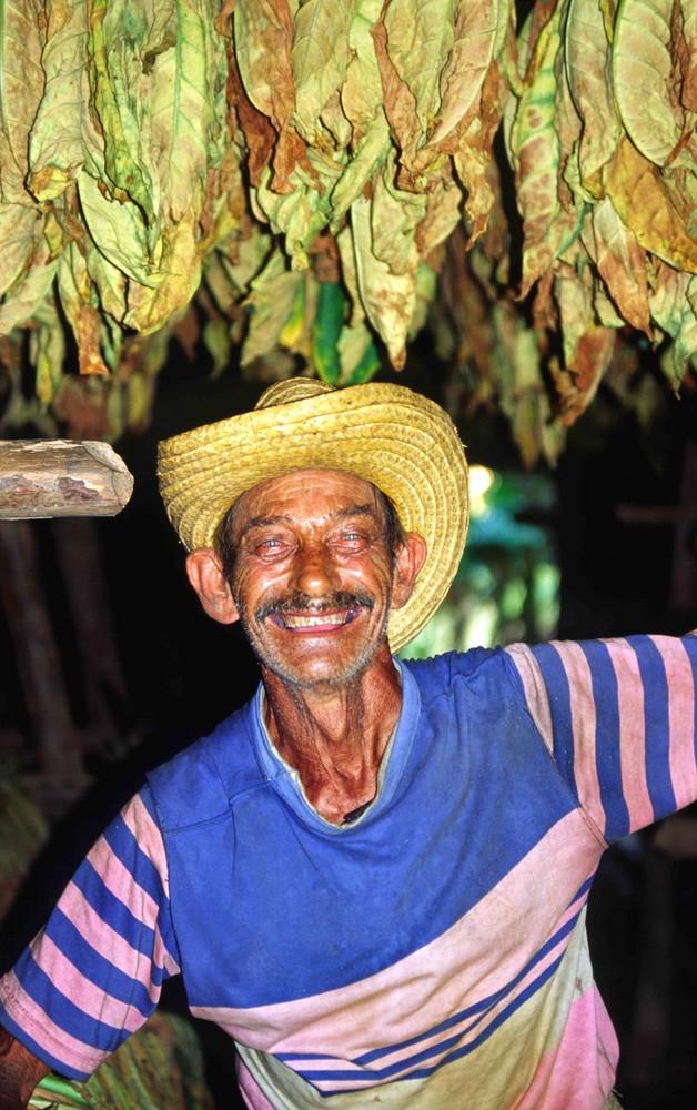Tabakbauer bei der Arbeit