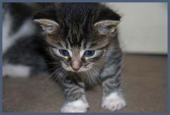 Tabasco the Cat...