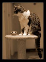 Tabby und die Maus