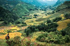 Tableau Vietnamien