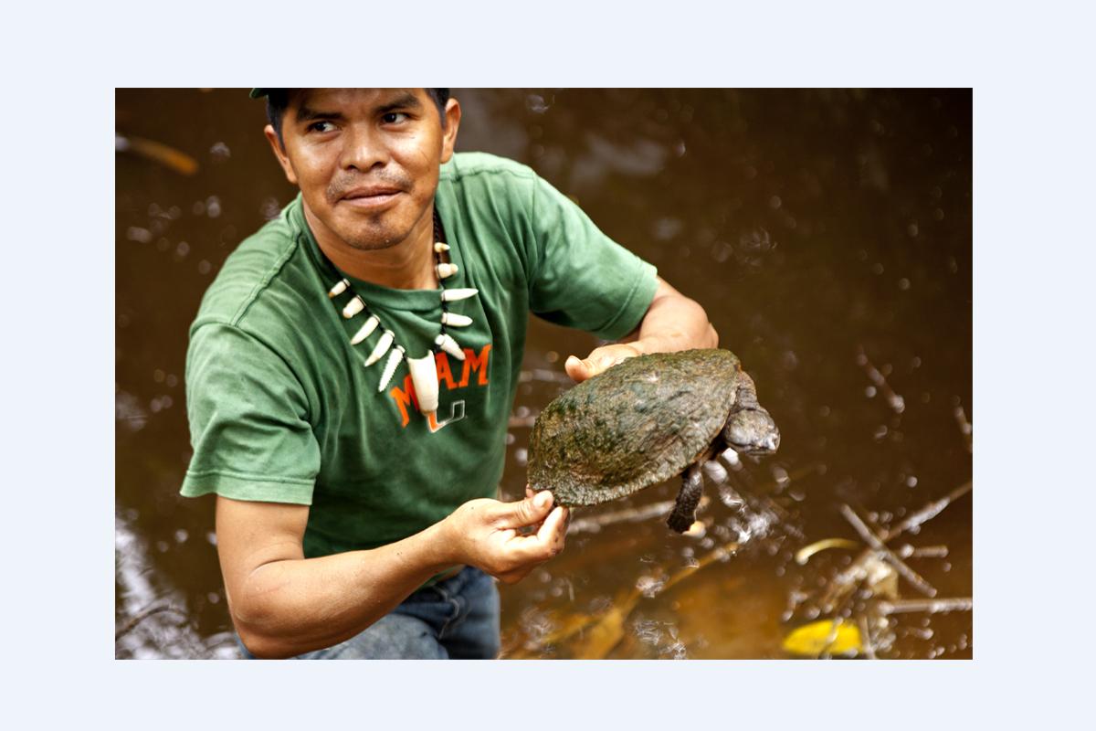 Tacana y la tortuga