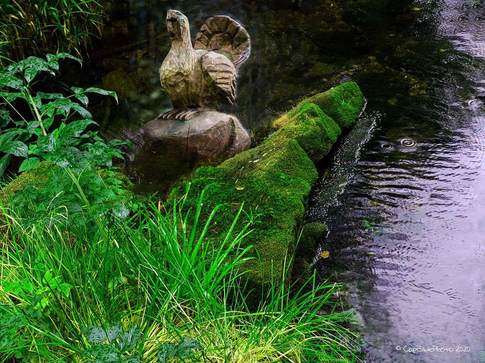 Täglich grüsst der Auerhahn am Kaltenbach