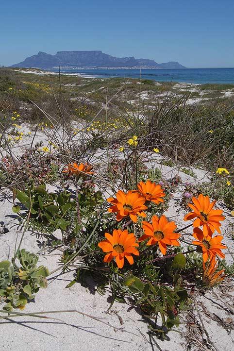 Tafelberg von Cape Town