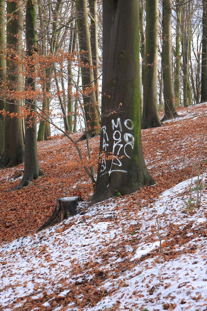 Tag dans les bois !
