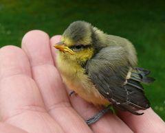 Tag der Nestflüchter / Die Kleine brauchte noch eine kleine Hilfestellung.