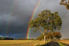 Tag des Regenbogens