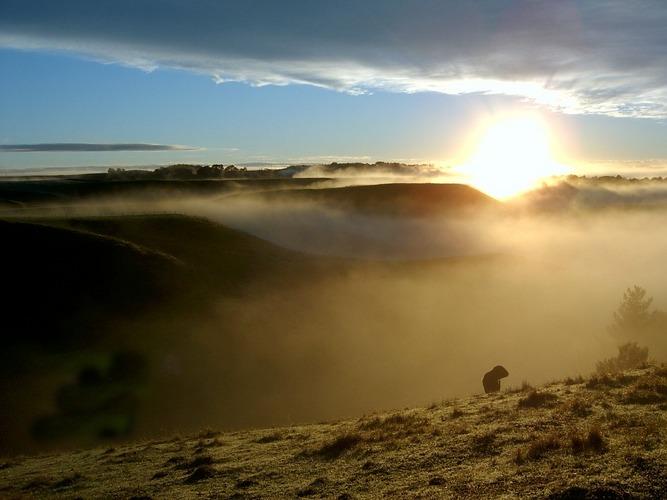 Tag und Schaf erwachen....