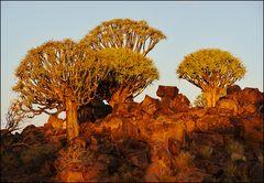 Tagesrandbäume