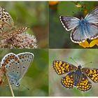 Tagfalter erfreuen unsere Herzen! (13) - Un regard en arrière et en avant: papillons.
