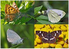 Tagfalter erfreuen unsere Herzen! (17) - Un regard en arrière et en avant: papillons.