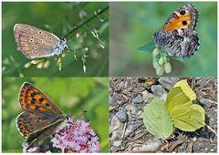 Tagfalter erfreuen unsere Herzen! (18) - Un regard en arrière et en avant: papillons.