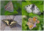 Tagfalter erfreuen unsere Herzen! (2) - Un regard en arrière et en avant: papillons.