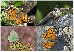 Tagfalter erfreuen unsere Herzen! (21) - Un regard en arrière et en avant: papillons.