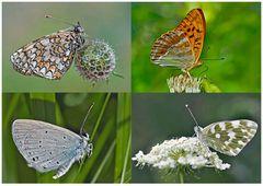 Tagfalter erfreuen unsere Herzen! (23) - Un regard en arrière et en avant: papillons.