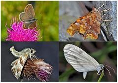 Tagfalter erfreuen unsere Herzen! (25) - Un regard en arrière et en avant: papillons.
