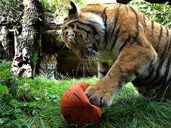 Taiga erobert den Ball