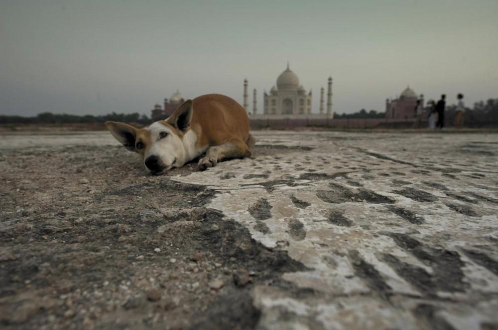 Taj and dog