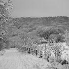 take a walk on the white side ...