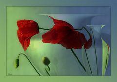 Tales of a poppy garden