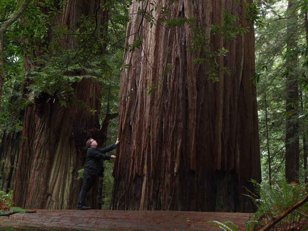 Tall Trees Grove 4