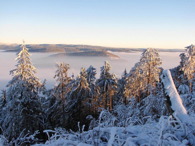 Talnebel im Harz 2