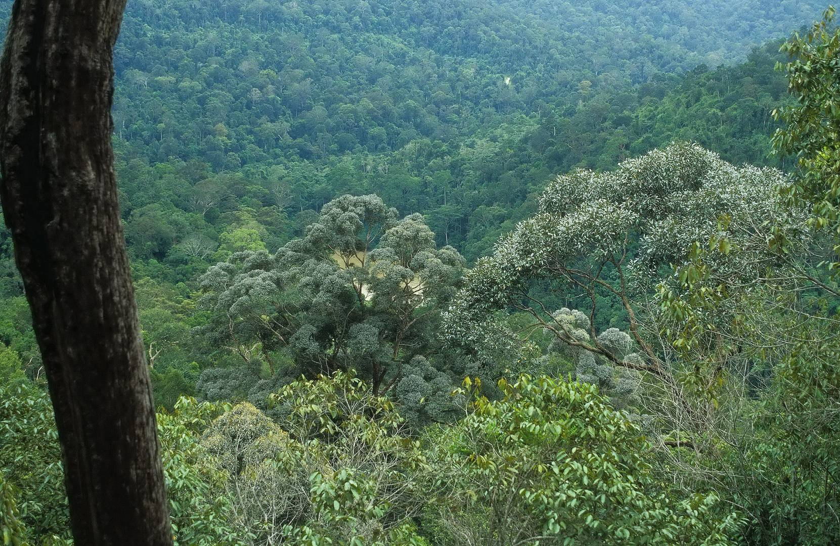 Taman Negara Bukit Teresek