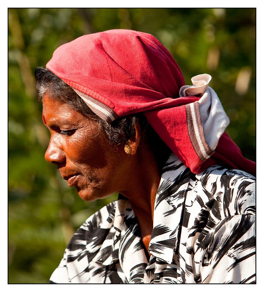 tamilische Teepflückerin #2