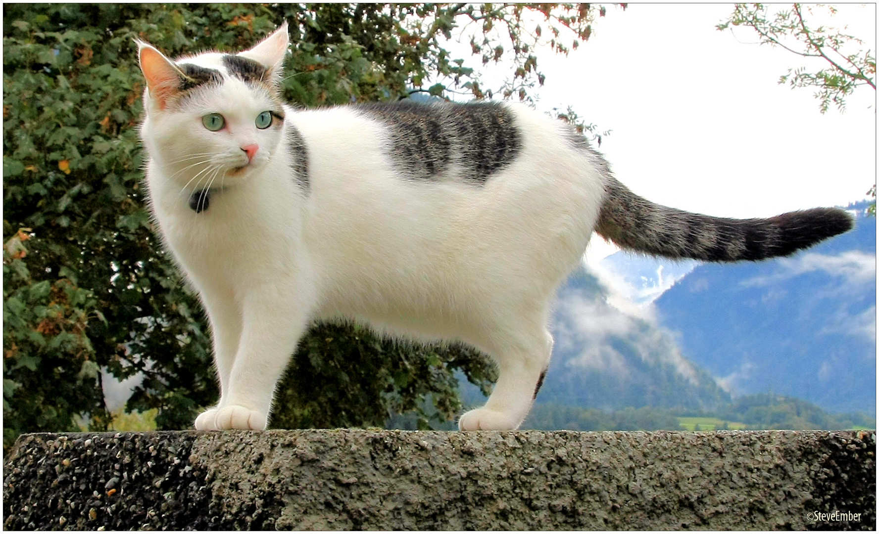 Tamins-Kitty