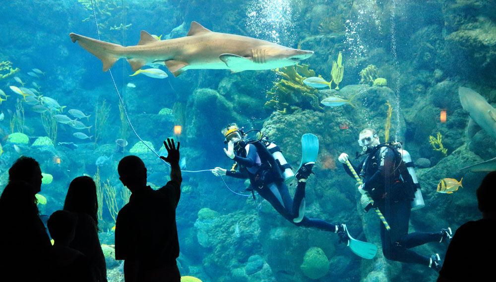 Tampa (The Florida Aquarium)