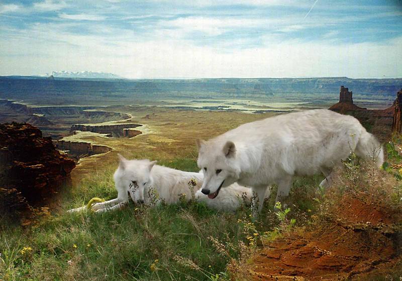 Tanjas Wölfe auf Reisen......