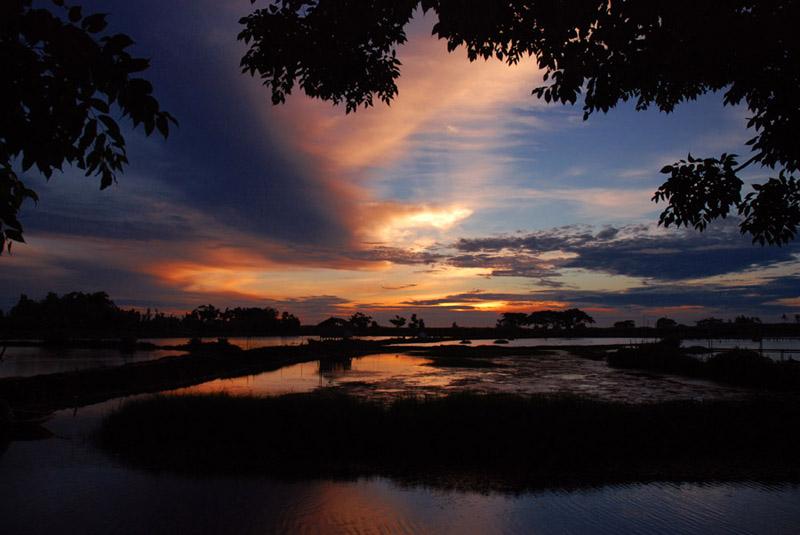 Tanjung Burung