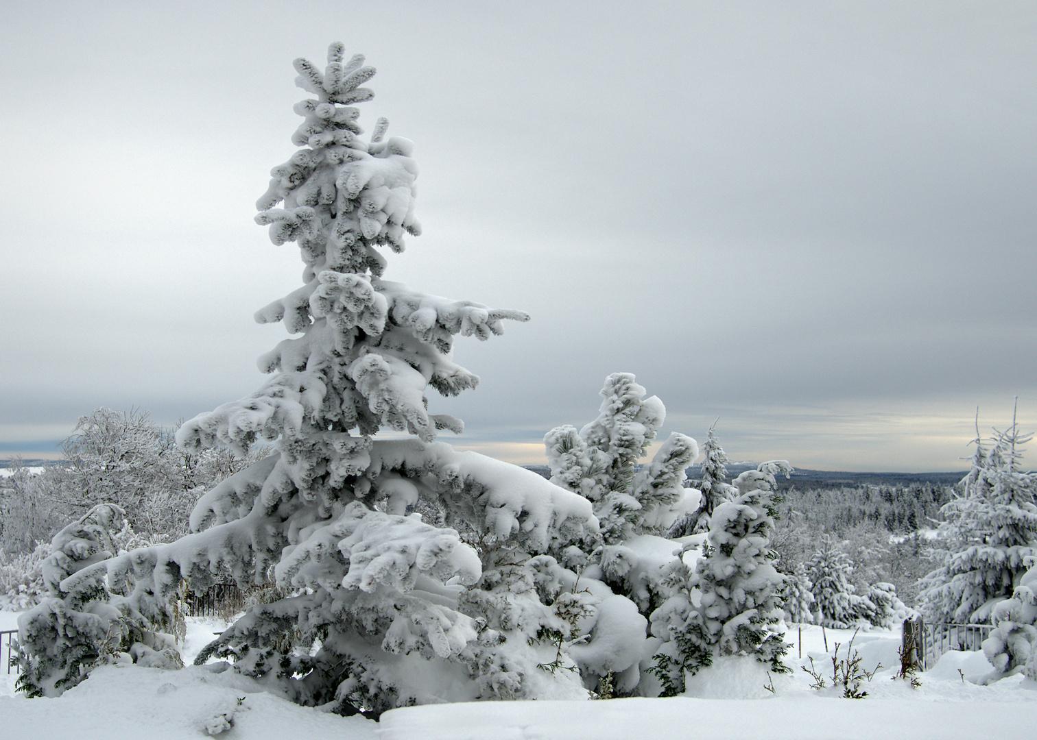 Tannenbaum Bilder.Tannenbaum Foto Bild Spezial Wald Dokumentation Bilder Auf