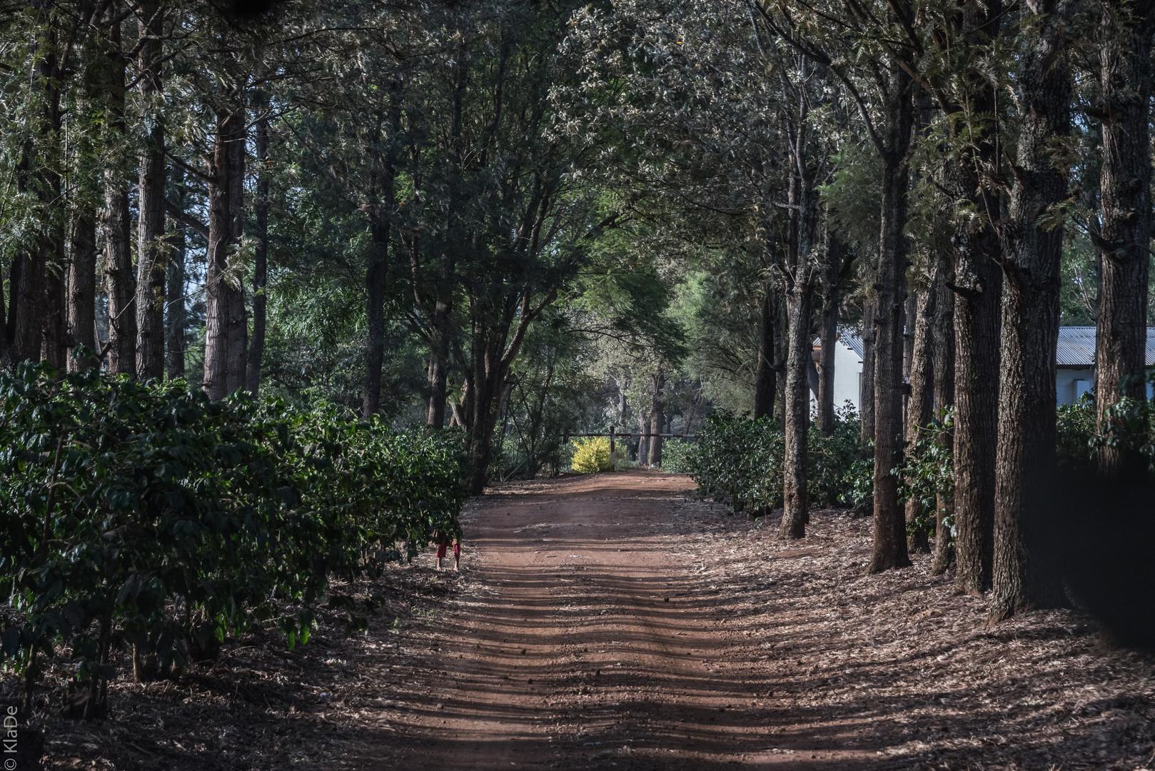 Tansania - Ngorongoro - Quartier im Karibuni Crater Forest Campted Camp
