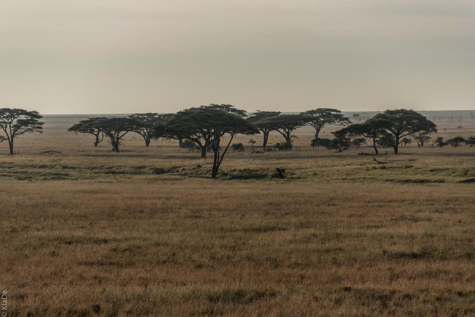 Tansania - Serengeti - Fahrt durch die Bäume