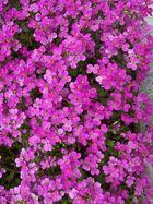 tanti piccoli fiori