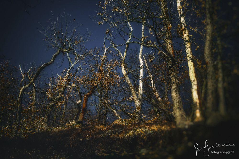 ... Tanz der Bäume ...