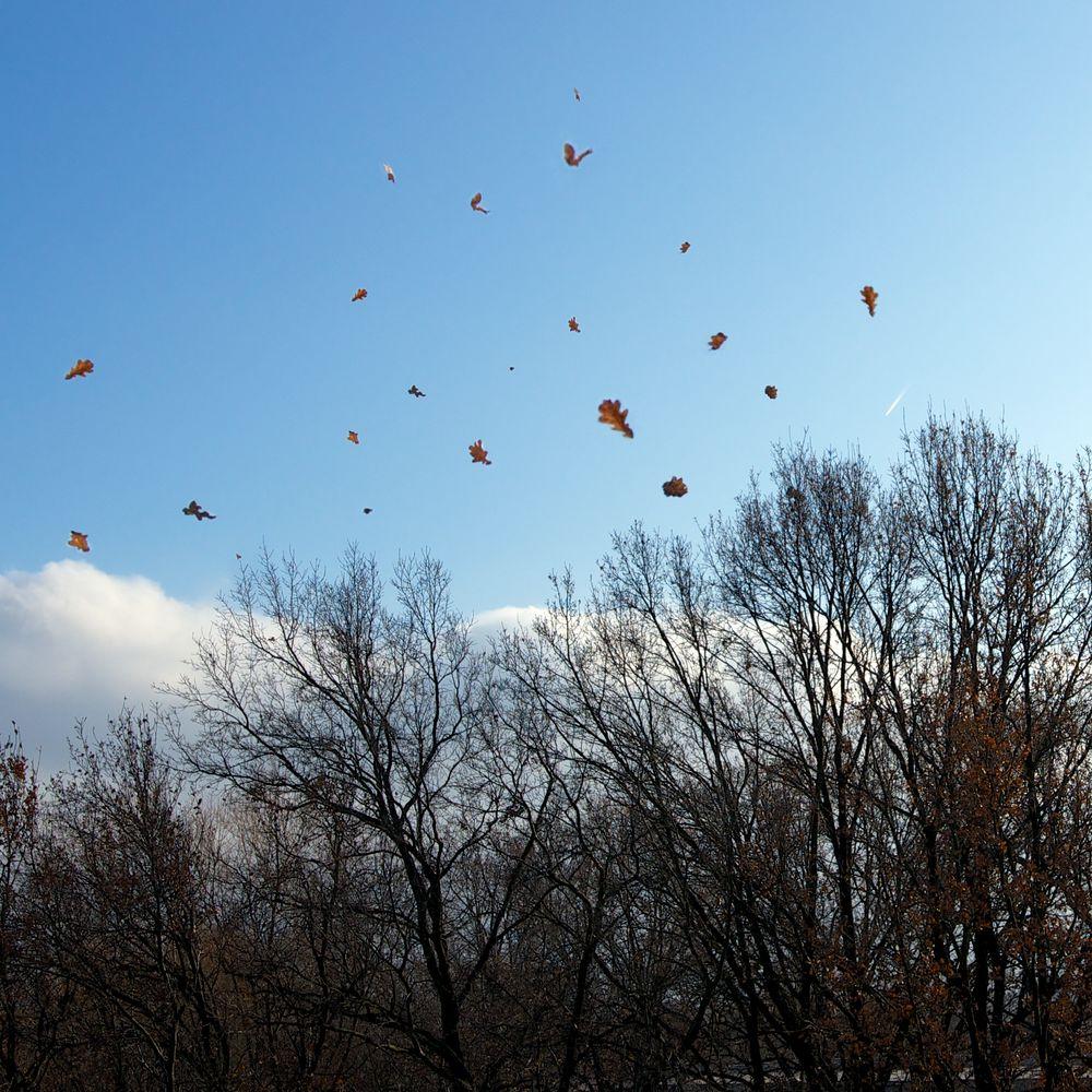 Tanz der Eichenblätter