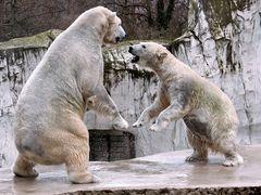 Tanz der Eisbären