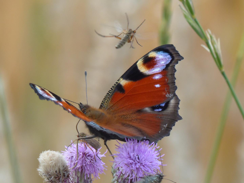 Tanz der Insekten